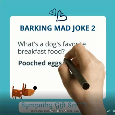 Denise Gibb Content writer meme barking mad joke 2